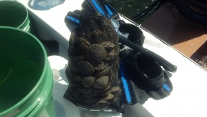Scalloping Gear