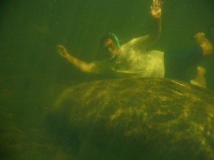 Swimming with Manatee